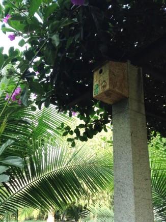 bird nest 9