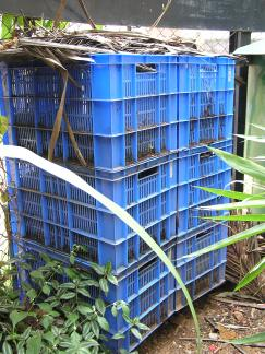 Once the compost is taken out of the Byobin, it is placed in these crates or a plastic barrel for further breakdown. Vani Murthy sprinkles a few earthworms and takes the compost quality to the highest level possible.