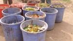 Segregated kitchen waste bins placed at strategic collection points.