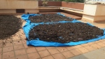 On the 15th day, compost is taken out and dried a bit to remove extra moisture.
