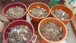Segregated kitchen waste collected in large buckets.