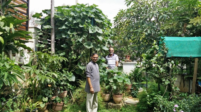 Gopinath's home garden is nourished by the compost produced inside the gated community.